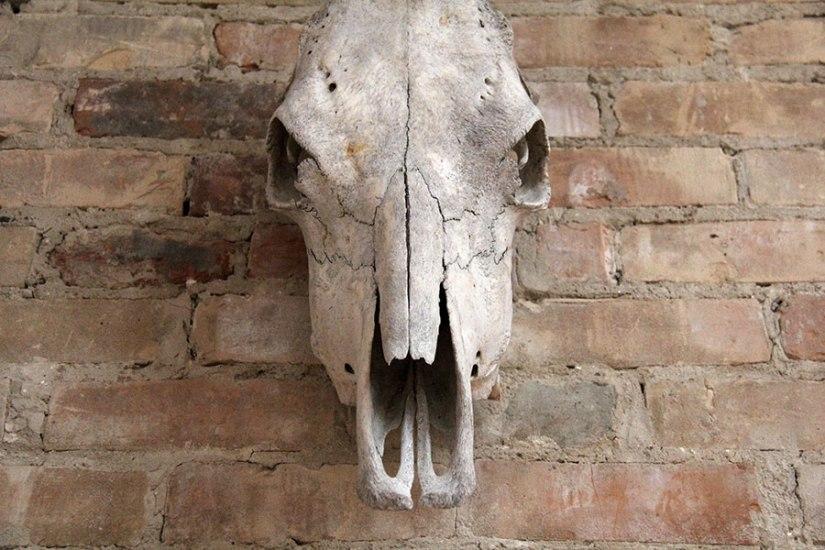 horse-skull-web