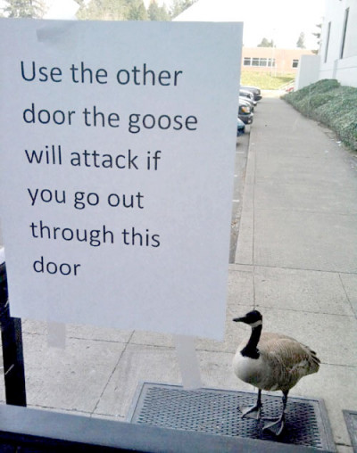 goose-will-attack-400x508
